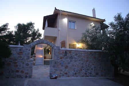 Maistros Studios  << Olive>> - Galaxidi - Wohnung