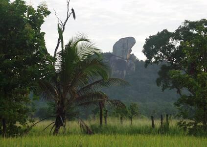 Galapita Natural jungle retreat - Buttala