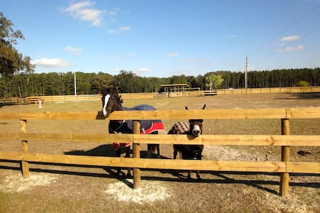 Horse Farm #1 HITS, Devils Den, Blue Grotto, Ocala - Williston - Huis