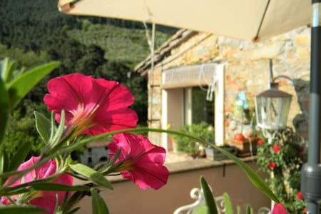 La Casina - charming Pisa Lucca - Buti - Apartment