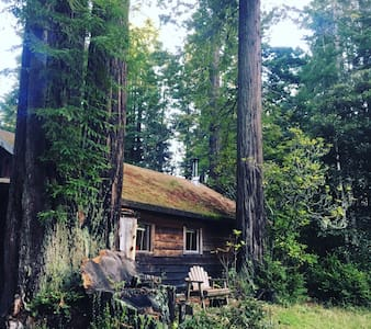 Cabin in Redwoods at Ocean! - Albion - Haus
