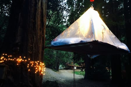 Epic AirTent in the redwoods, West