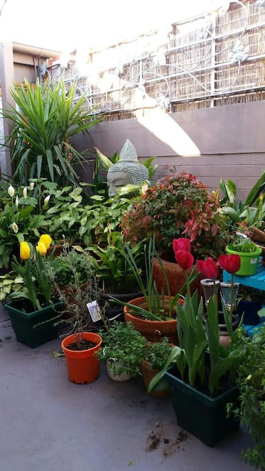 Spring in the courtyards 2015