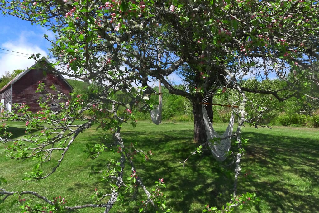 Hammocks under the apple tree - perfect for kids and adults