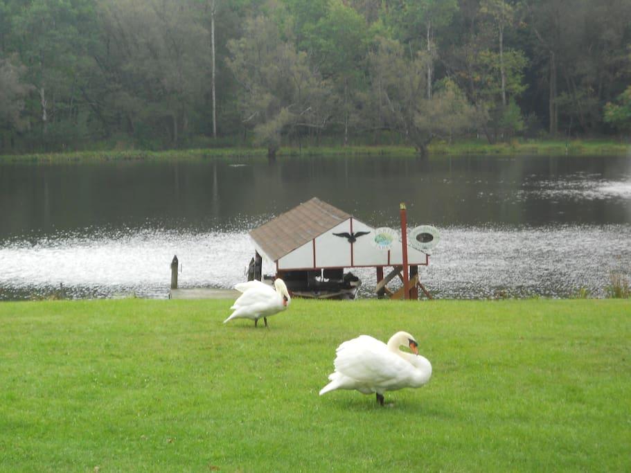 BEAUTIFUL PRIVATE LAKE!