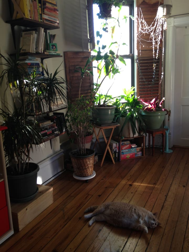 Living room featuring Spud the cat!