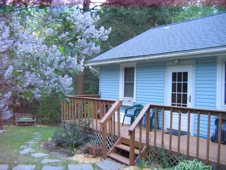 Charming Cozy Cottage Garden - The lilacs are in bloom.  It's May!