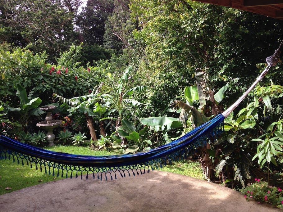 Hammocks on the patio