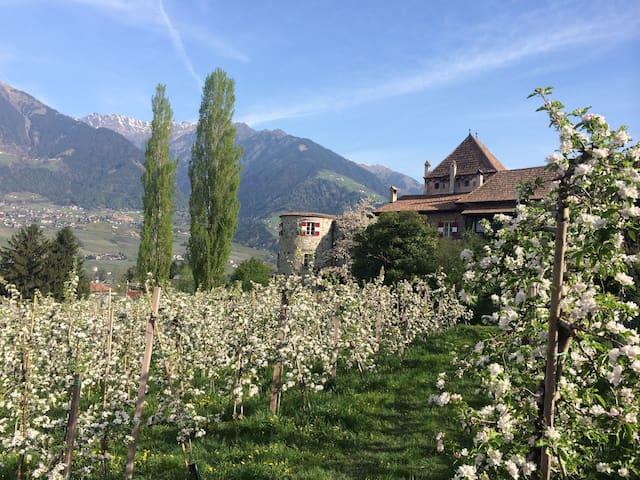Ferienwohnung Schloss Planta, Meran - Castle