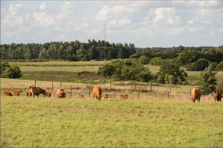 Near by Holstebro, Skive, Viborg.