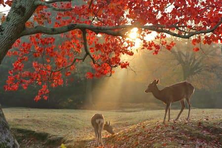 Best season for Autumn leaves