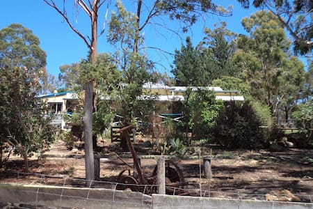 Where the Gumtrees are - House