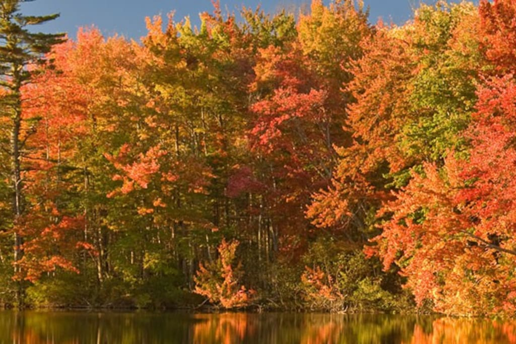 Come see foliage in Maine.