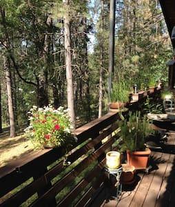 Mama Bear's Cabin - Ev