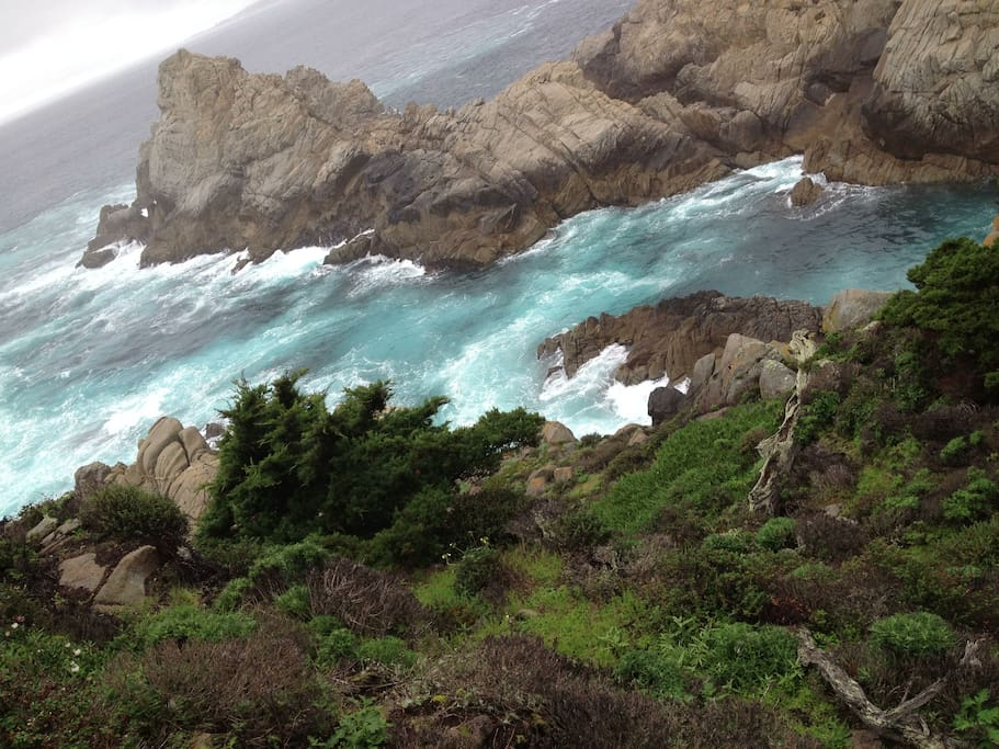 Pt. Lobos has all the drama of the California Coast and is 5 minutes away!