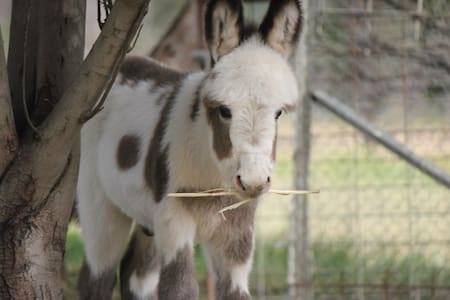 Donkey Tales Farm Cottages- Duffy's - Chalet