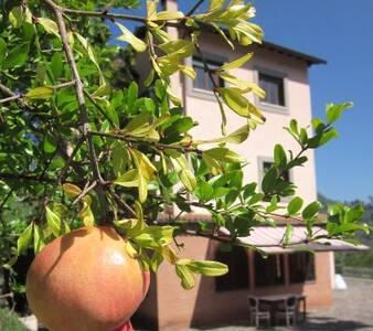 """""""IL CASONE"""" - VALLE DELL'ANIENE - Anticoli Corrado - Haus"""