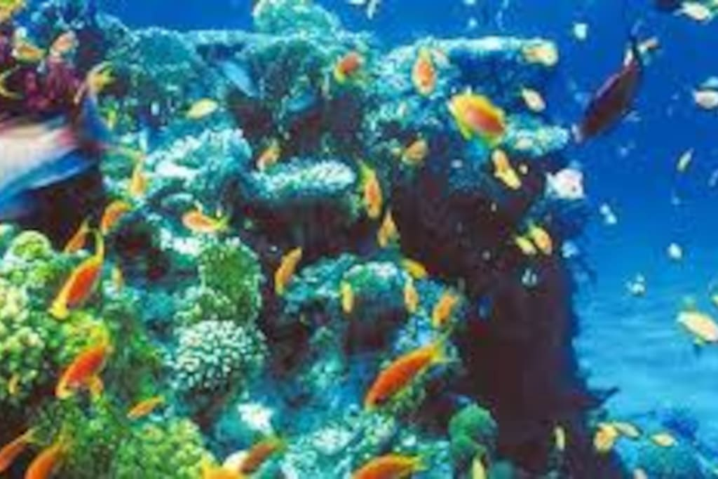 """Dive And See,,,,  Red Sea,,,""""Dahab"""""""