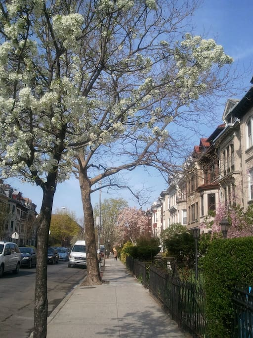 my block! at the end is prospect park!