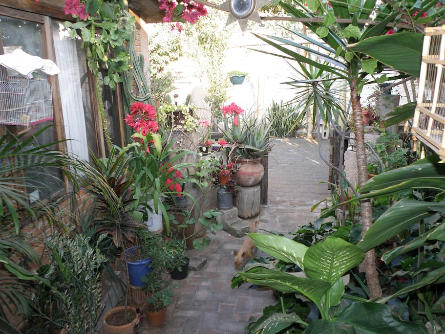 BEAUTIFUL HOUSE FOR RENT IN MORELIA