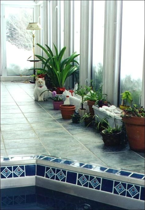 Tiled hot tub in sunroom - very private except for feline observer
