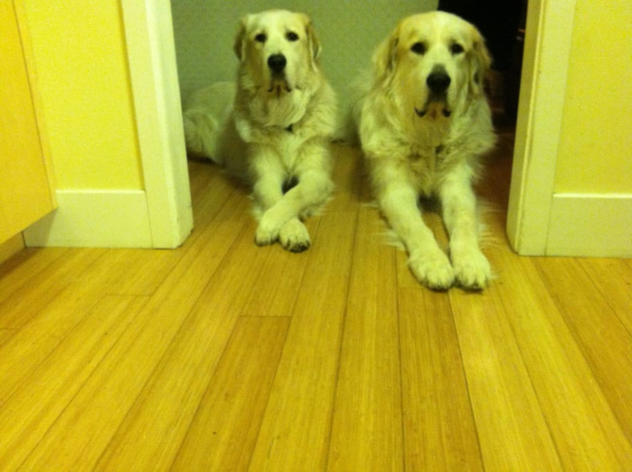 Lady and Puff expectant, yet obedient, wait at the kitchen entrance impatient to be invited to partake of their dinner.