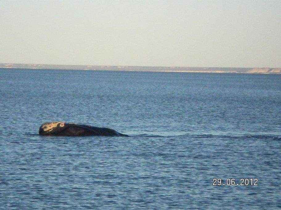 Enjoy the amazing whales just across from our cozy unit in Puerto Madryn!