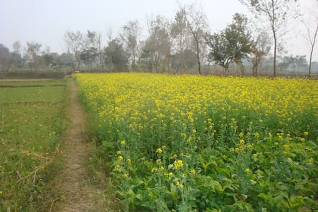Countryside house nearby Lumbini - Bed & Breakfast