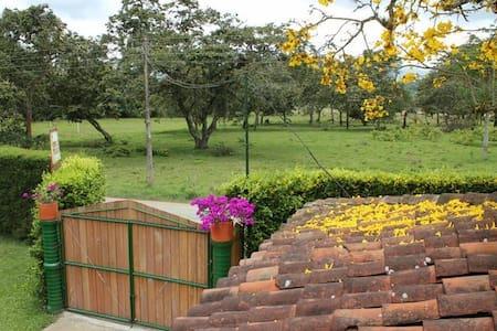 Finca La Clarita - coffee farm - Flat