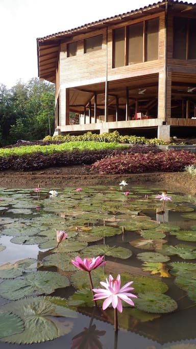 The lodge and the water lilies pond