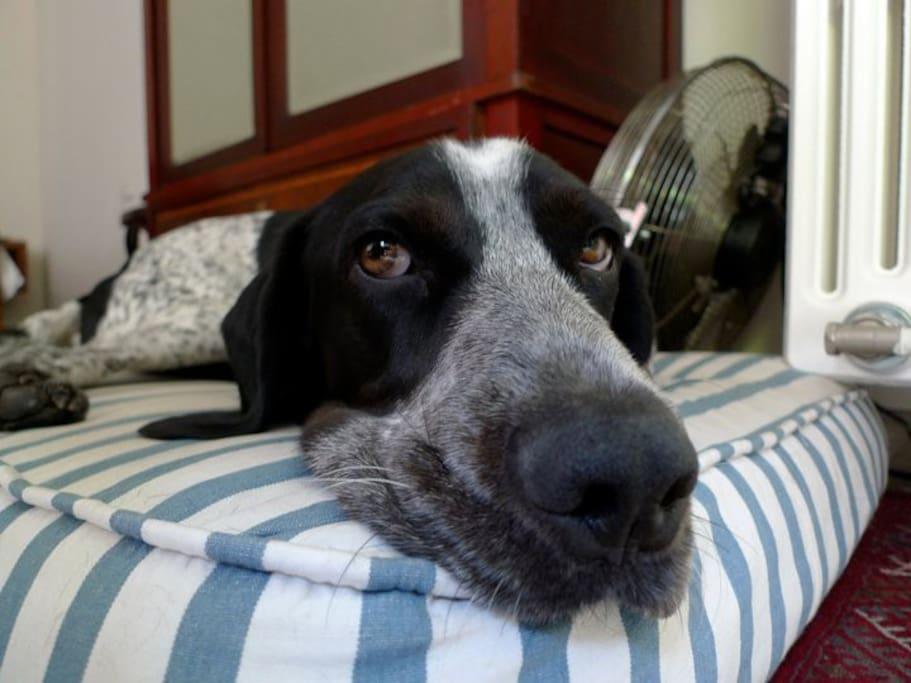 Danko, the world's sweetest dog