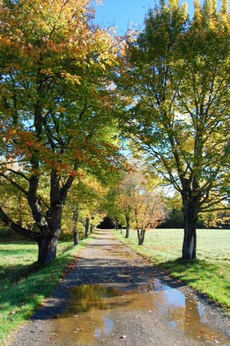 The maple lined lane to Kendall Farm