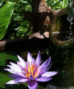 Gorgeous Zen Waterfall Private Room - Kilauea - House
