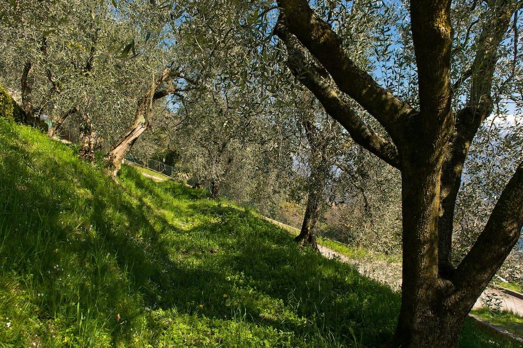 Uno scorcio di giardino/ A glimpse of the garden