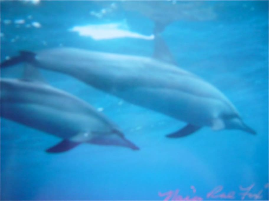 Swim with dolphins at nearby Kehena Beach.