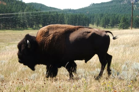 Black Hills Home Where the Buffalo Roam-Custer - Hus