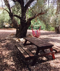 Olive tree-Rosh Pinna - ראש פינה - Haus