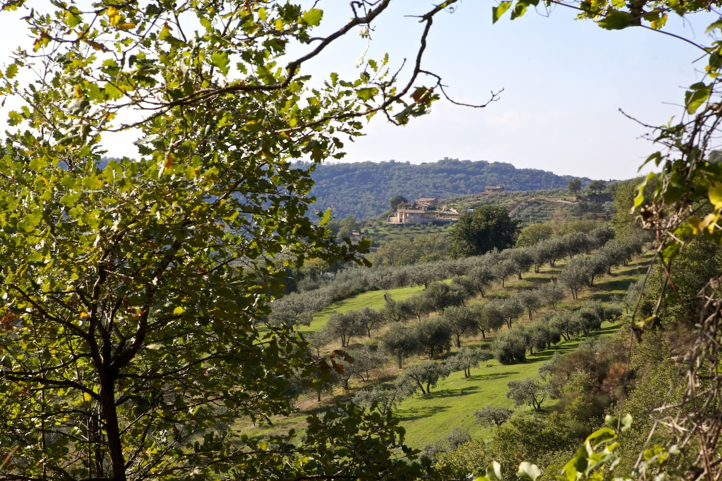 Dominating position, at the top of the hill, with fields of olive trees around.