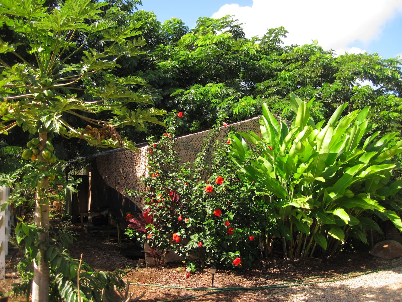 The tent is nestled under monkeypod trees and surrounded by flowers and fresh fruit