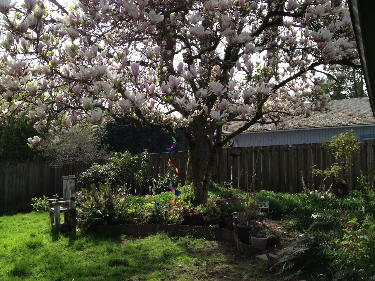Garden oasis in the beautiful, spacious backyard. The magnolia tree blooms twice a year.