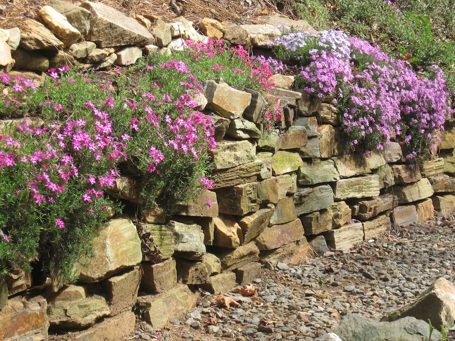 Rock garden Path to outdoor shower