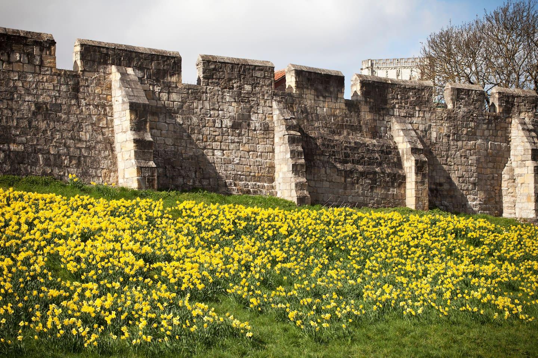 St Maurice's Court, York City Walls