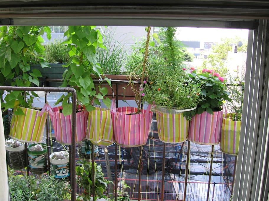 Part of my fire escape garden, seen from one of the kitchen windows during summer.