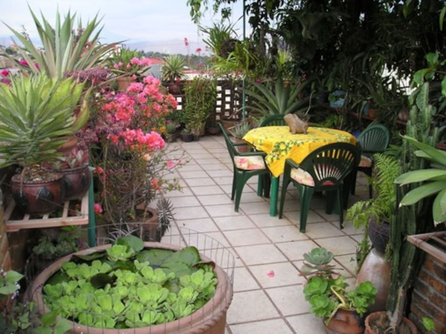 Enjoy reading or relaxing on the rooftop terrace among Bill's fabulous orchid collection.