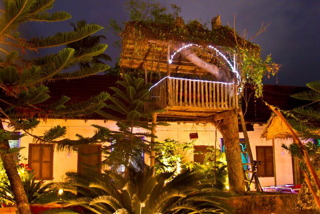 night view & tree house