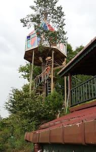 Olimbera ağaç ev - Dům na stromě