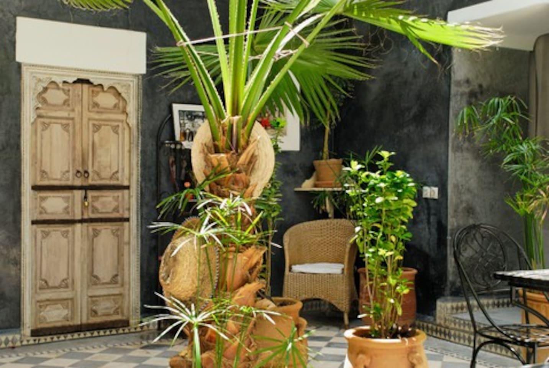 Le palmier du patio.