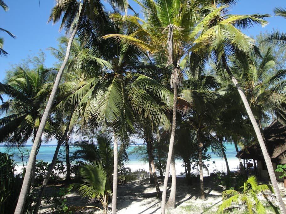 view to the sea through coconut palms