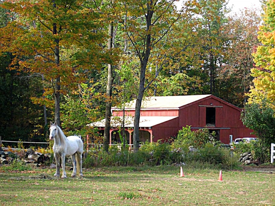 View of our neighbors horse paddock in the fall. We are in the country.