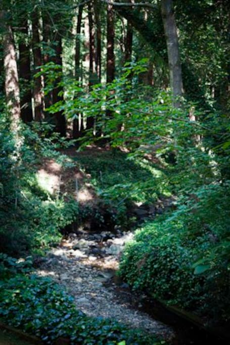 View of the creek and redwood grove